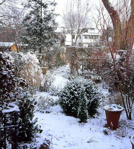 take care garden in winter
