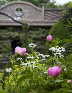 Dinnick Garden, flowers