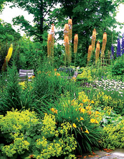 Yellow and orange foxtail lilies, blue delphiniums
