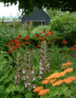 Rich red Helenium, two-tone bear?s breeches and spicy yarrow