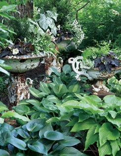 ?Striptease? and ?Java? hostas are resplendent against Havermann?s lushly planted, antique white containers.