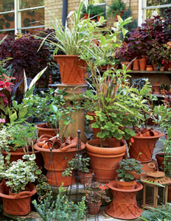 Beautifully planted terracotta pots bedeck every step.