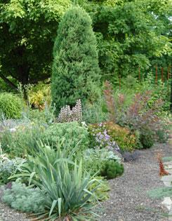 Silver-foliaged plants give the garden a Mediterranean look