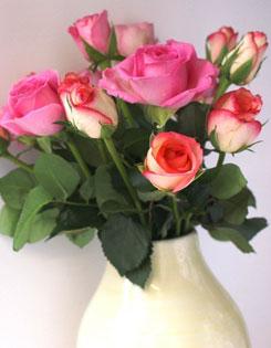 Pink roses in a beige vase