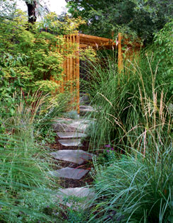 A slatted pergola is visible through a scrim of arching ornamental grasses in this Toronto courtyard garden