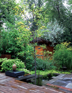 The homeowner has capitalized on every bit of space to house a very personal collection of plants from trees to ground covers