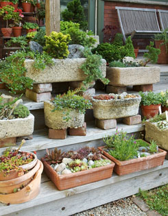 Hand-crafted tufa troughs hold artful arrangements of trees, shrubs and succulents