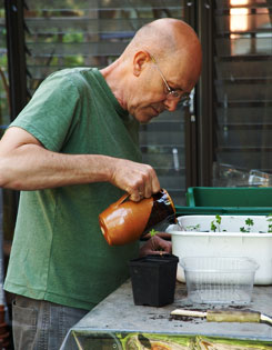 Plantsman/propagator Barry Parker tends some of his seedlings