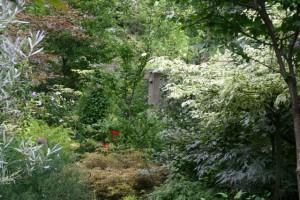 garden before pruning