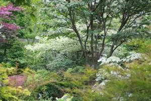 2012 June mid garden