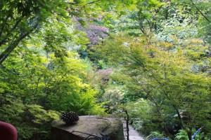 2011 overall garden in June