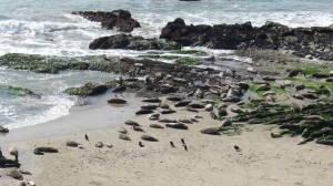 2012 Seal rookery