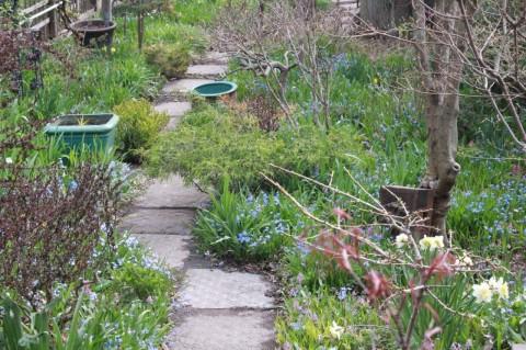 2015 May 2 garden