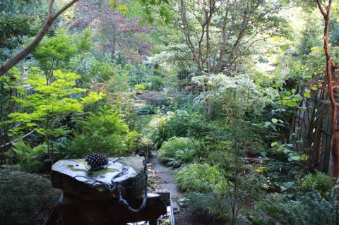 The Garden July 2015